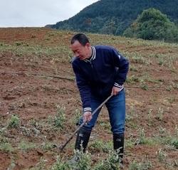 我也是茶农——记绿色农药与农...
